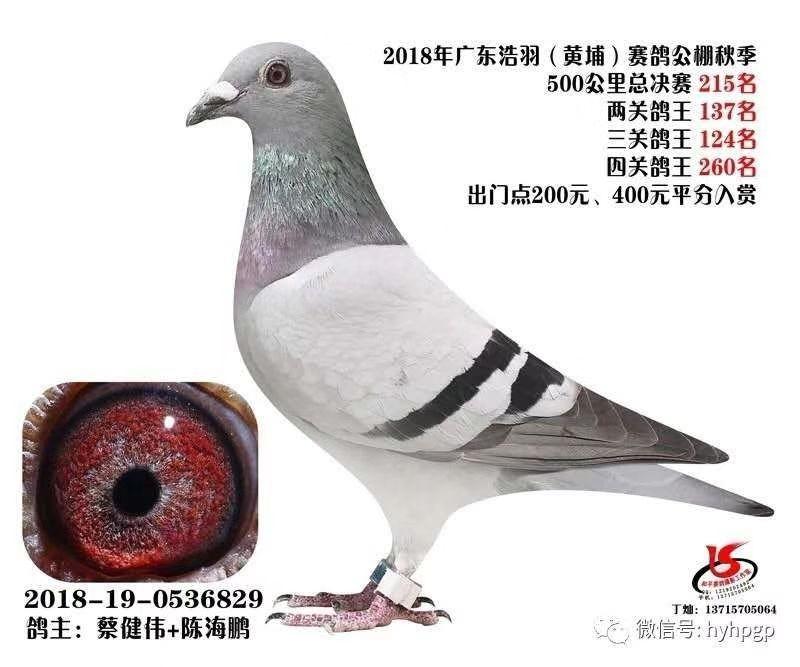 18秋500公里足环总决赛215名 蔡健伟+陈海鹏