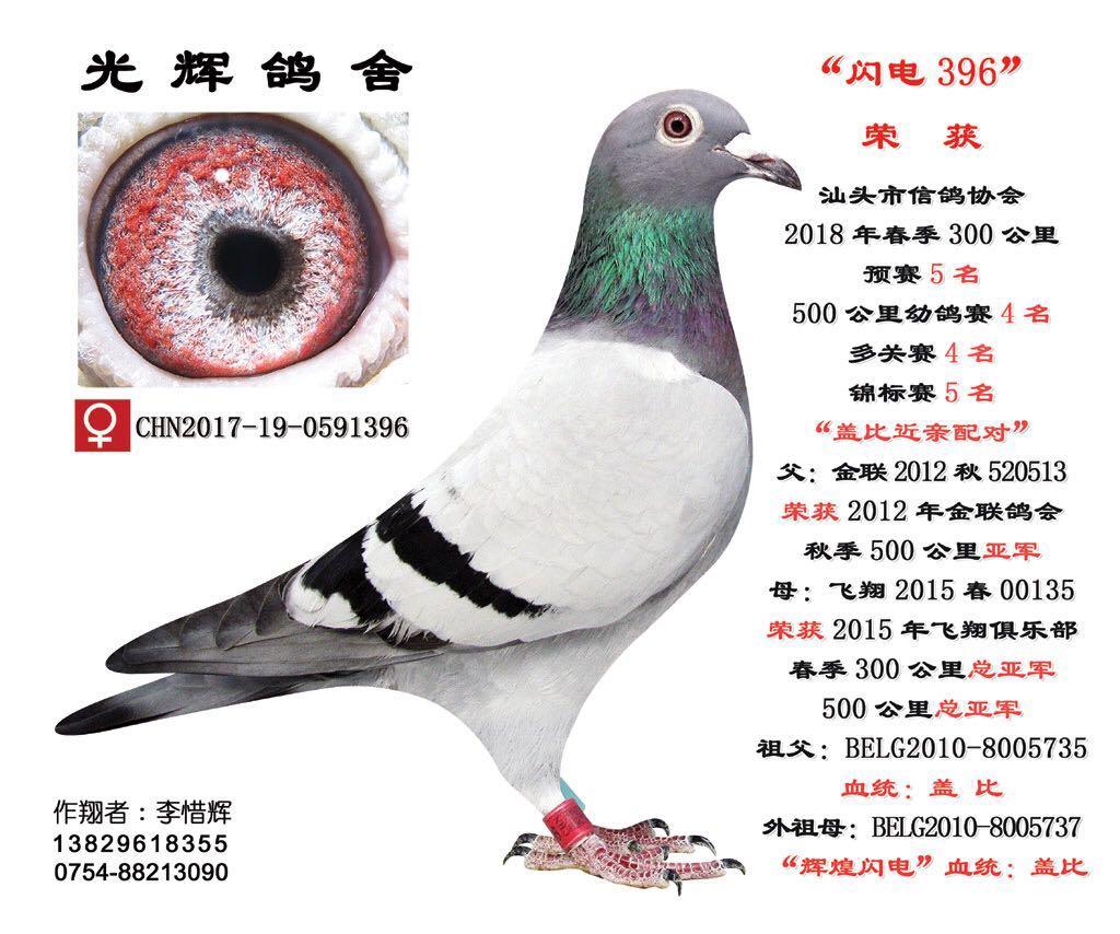 汕头市信鸽协会18春500公里幼鸽赛4名