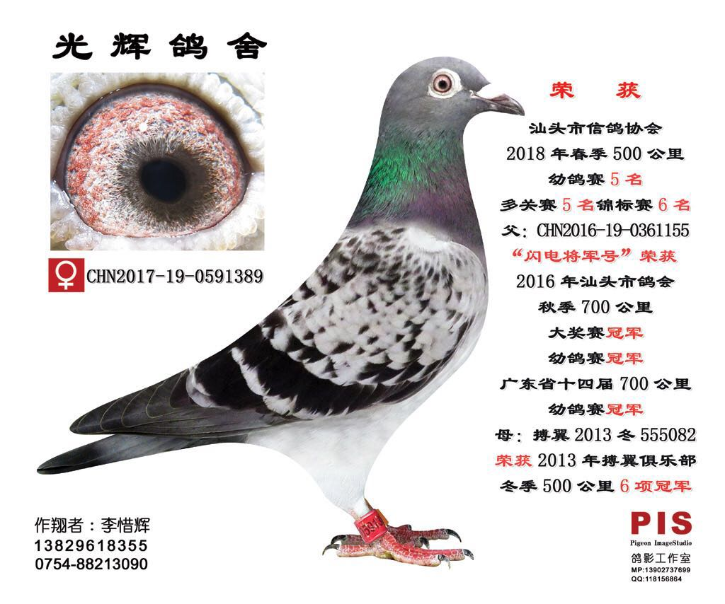 汕头市信鸽协会18春500公里幼鸽赛5名