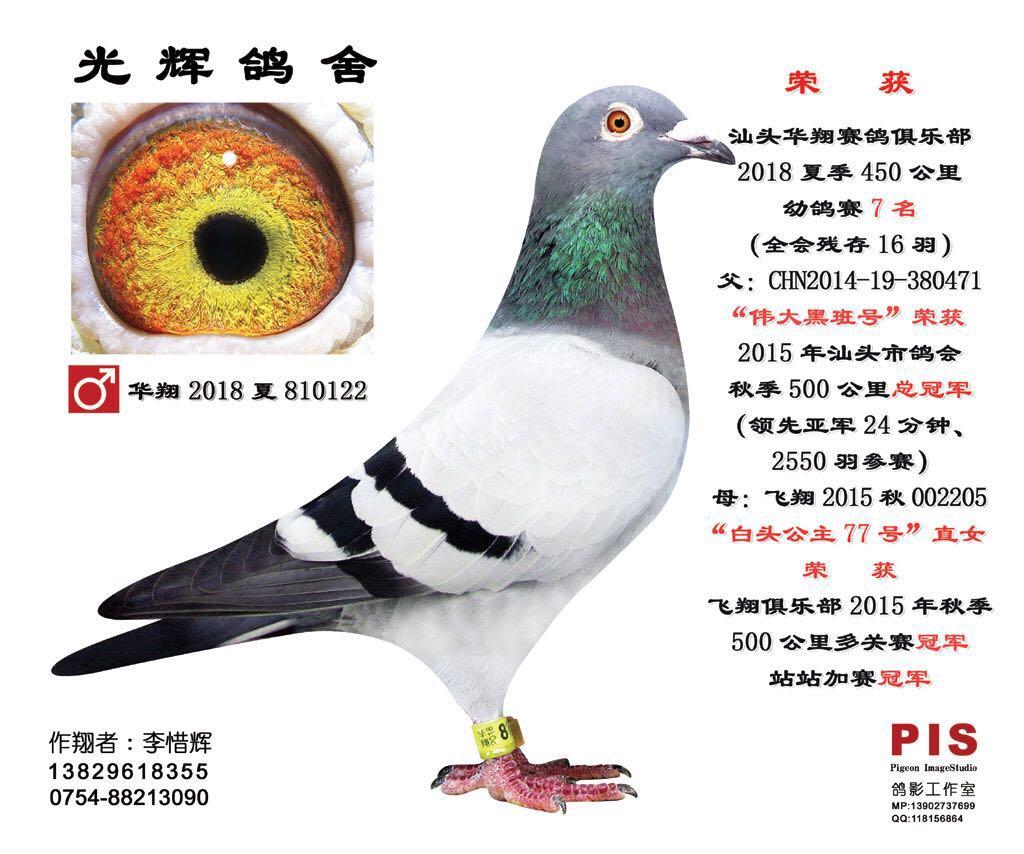 汕头市华翔赛鸽俱乐部18夏450公里幼鸽赛7名