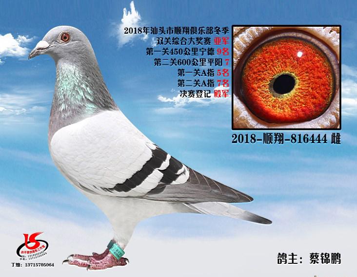 18年冬季双关综合亚军 蔡锦鹏