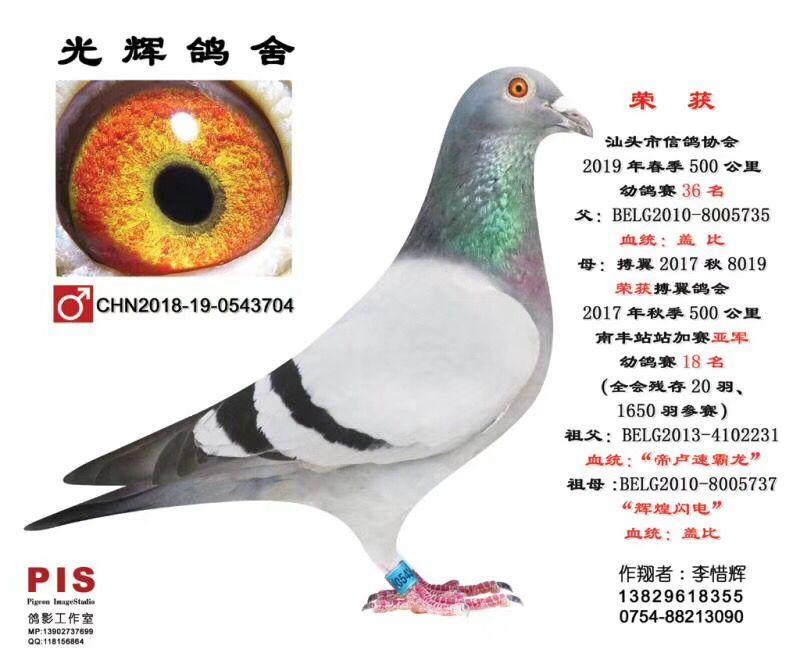 汕头市信鸽协会19春500公里幼鸽赛36名