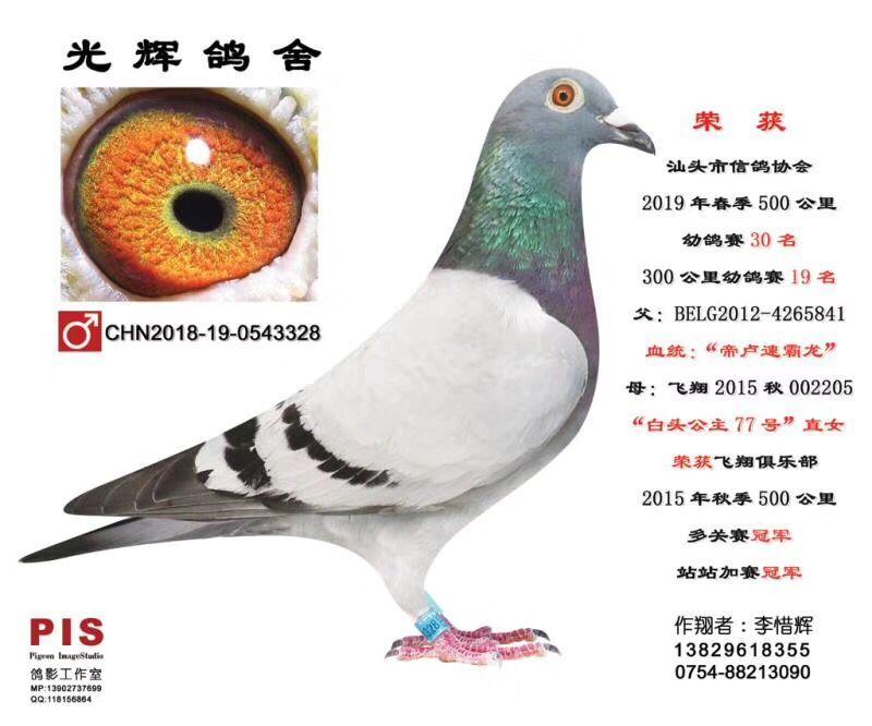 汕头市信鸽协会19春500公里幼鸽赛30名