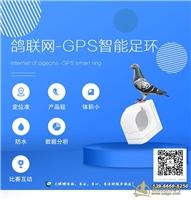 赛鸽智能GPS足环,信鸽gps足环,赛鸽gps实时定位追踪器