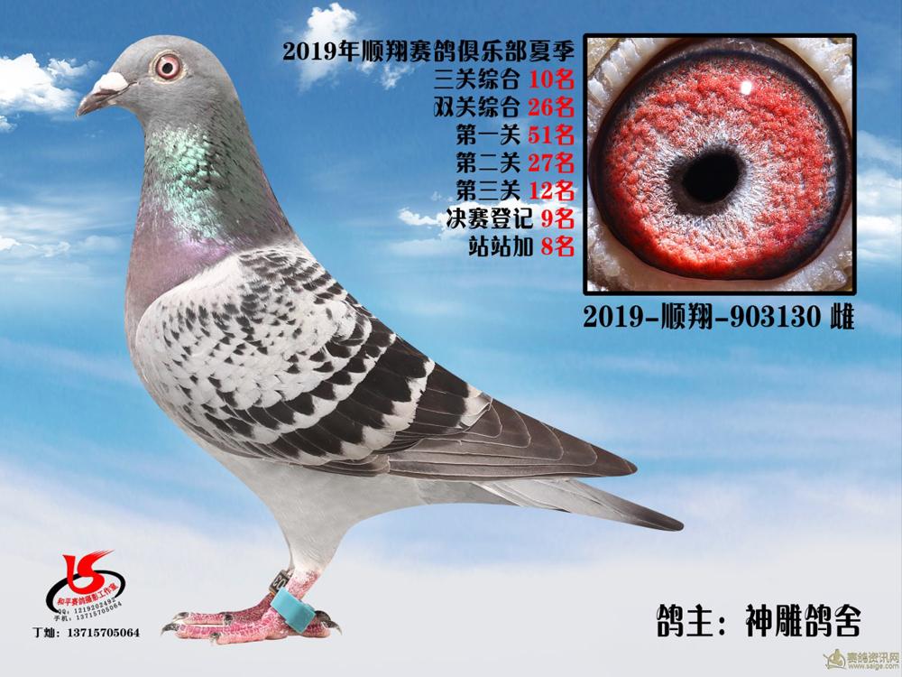 19年夏季大奖赛三关综合10名 神雕鸽舍