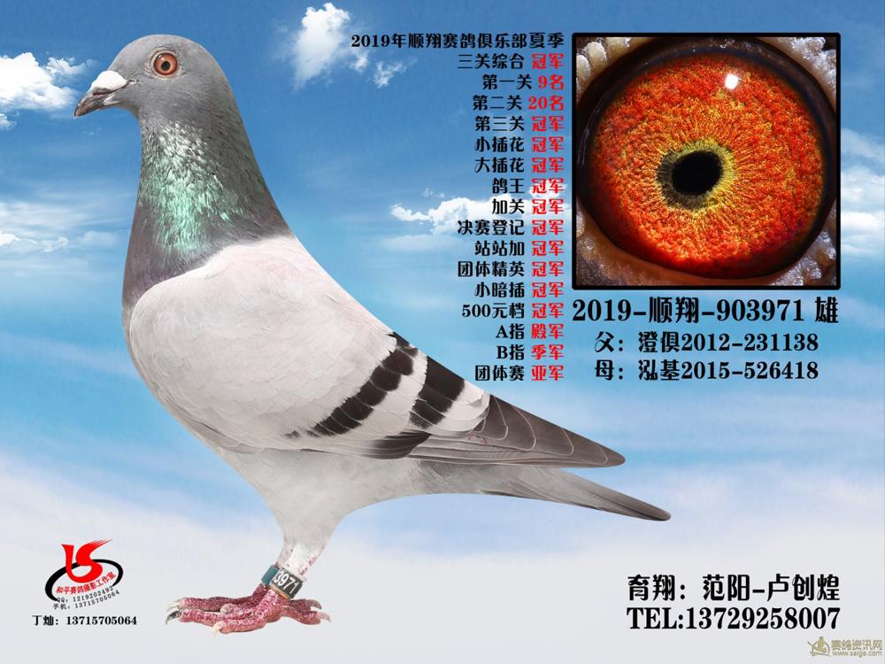 19年夏季大奖赛三关综合冠军 范阳 卢创煌