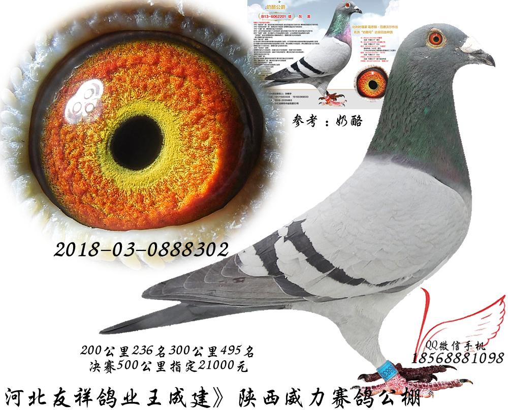 对已使用四型电子扫描鸽钟的会员_天津赛鸽网