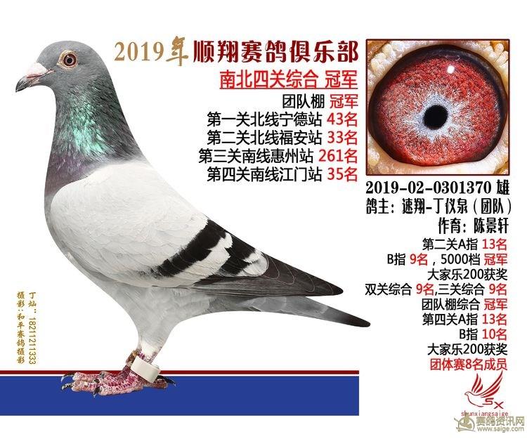 19年秋南北四关鸽王大奖赛冠军 速翔-丁仪泉 陈景轩