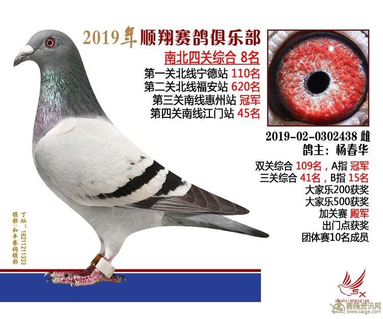 19年秋南北四关鸽王大奖赛8名 杨春华