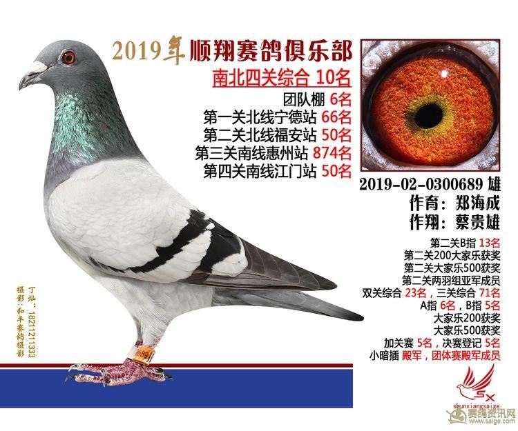 19年秋南北四关鸽王大奖赛10名 蔡贵雄 郑海成