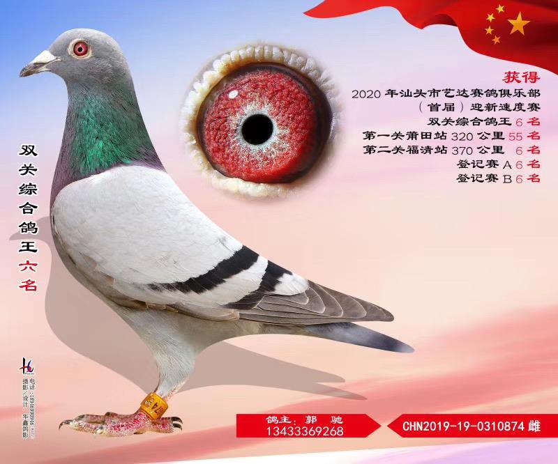 汕头市艺达赛鸽俱乐部首届迎新速度赛双关综合鸽王六名