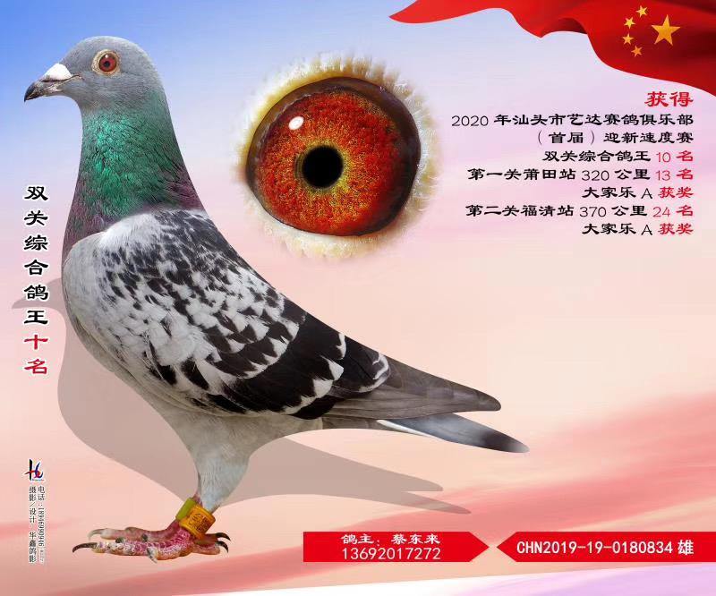 汕头市艺达赛鸽俱乐部首届迎新速度赛双关综合鸽王十名
