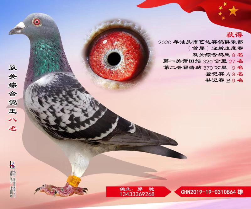 汕头市艺达赛鸽俱乐部首届迎新速度赛双关综合鸽王八名