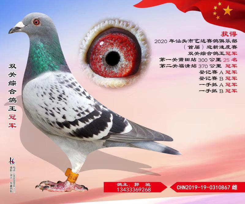 汕头市艺达赛鸽俱乐部首届迎新速度赛双关综合鸽王冠军