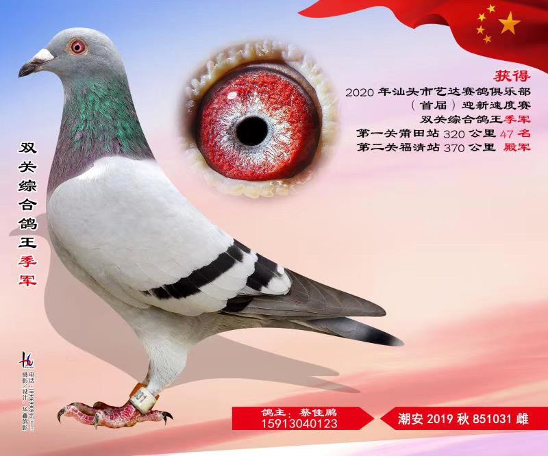 汕头市艺达赛鸽俱乐部首届迎新速度赛双关综合鸽王季军