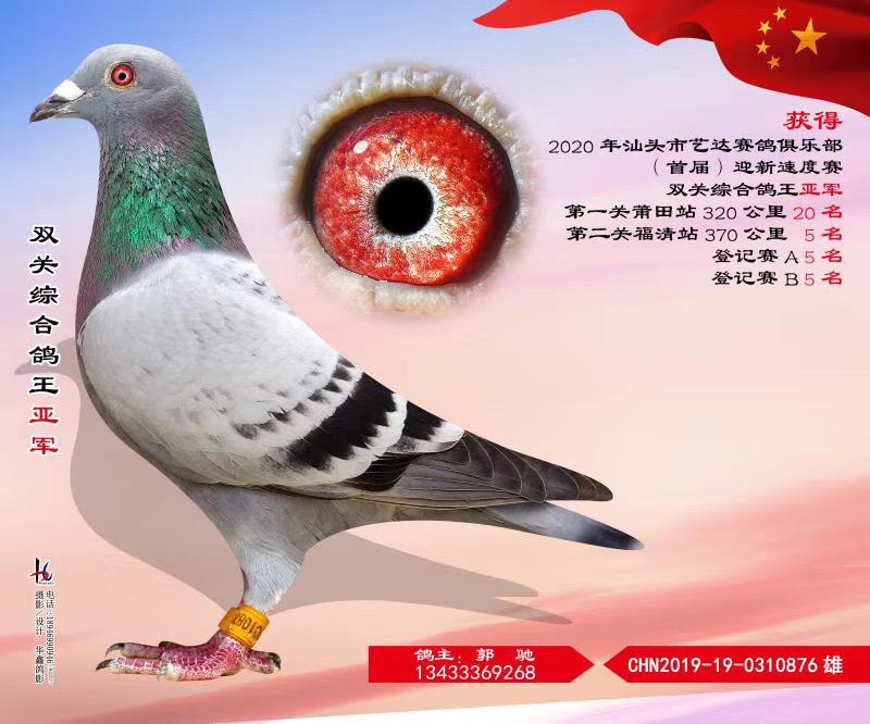 汕头市艺达赛鸽俱乐部首届迎新速度赛双关综合鸽王亚军