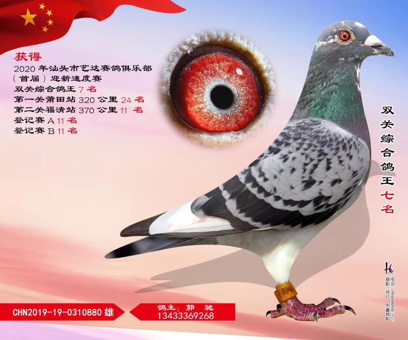 汕头市艺达赛鸽俱乐部首届迎新速度赛双关综合鸽王七名