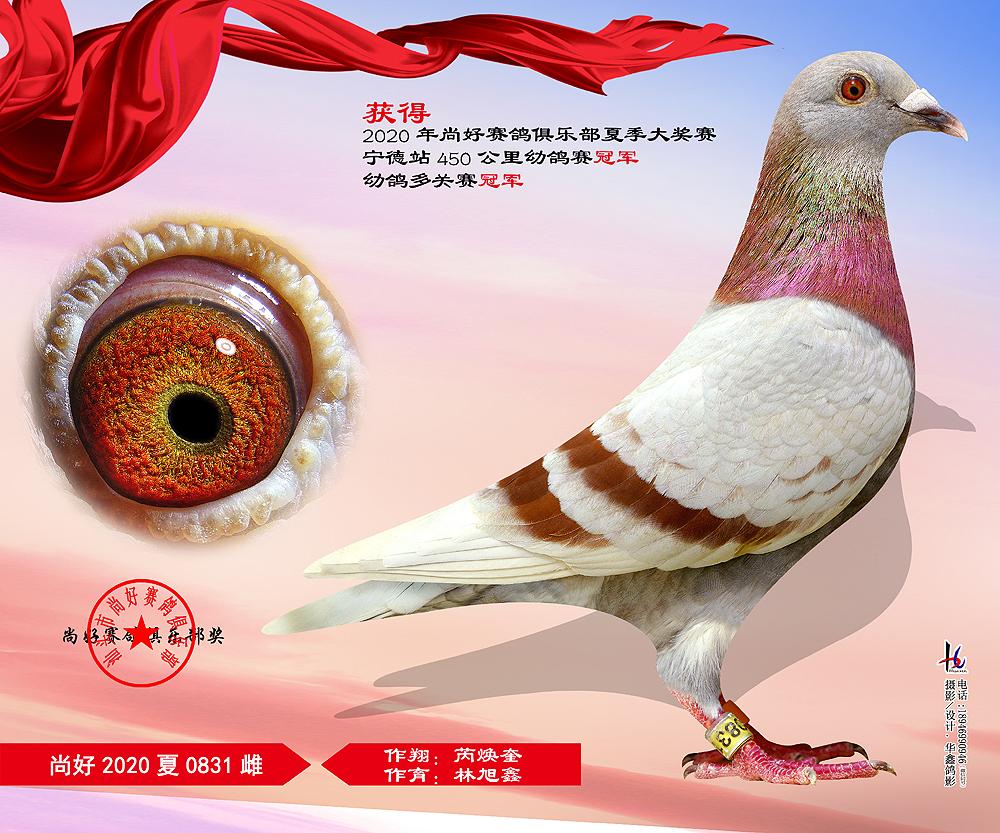 20年夏季大奖赛450公里幼鸽赛冠军 芮焕奎  林旭鑫