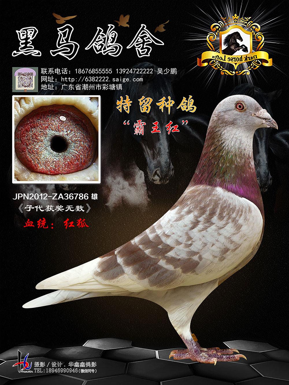 特留�N�� 霸王�t JPN2012-ZA36786