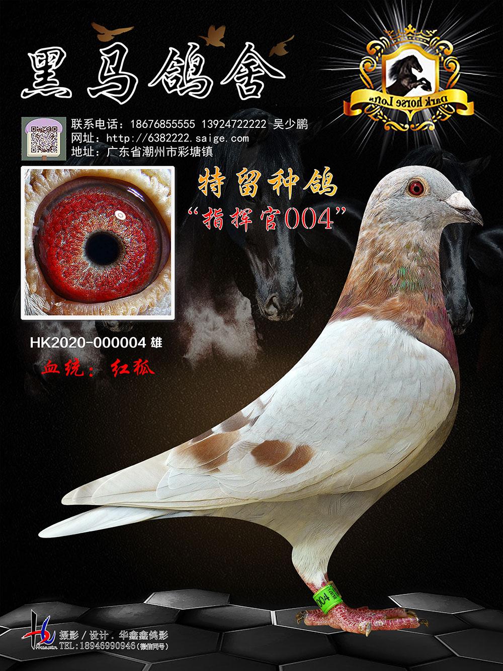 特留种鸽 指挥官004 HK2020-000004