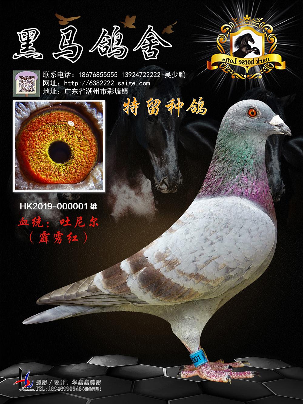 特留种鸽 吐尼尔 霹雳红 HK2019-000001