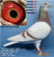2007-02-231174 团体冠军之一 已售甘肃天水王启峰