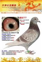 16-02-0093777 已售湖北荆门龚先生