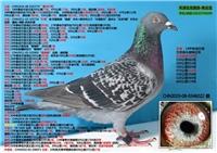 19-08-0346022 已售新疆阿拉尔李勇先生