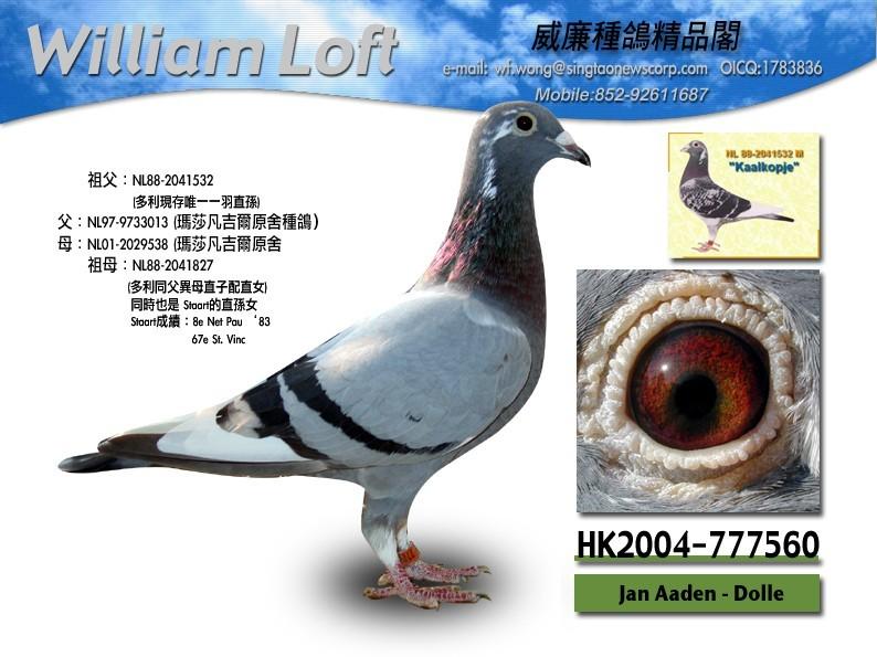 鸽子鸽鸟类教学图示鸟动物794_595世界最大的蜗牛图片