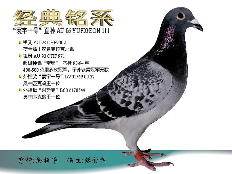 中国芯的论文_中国信鸽赛事直播
