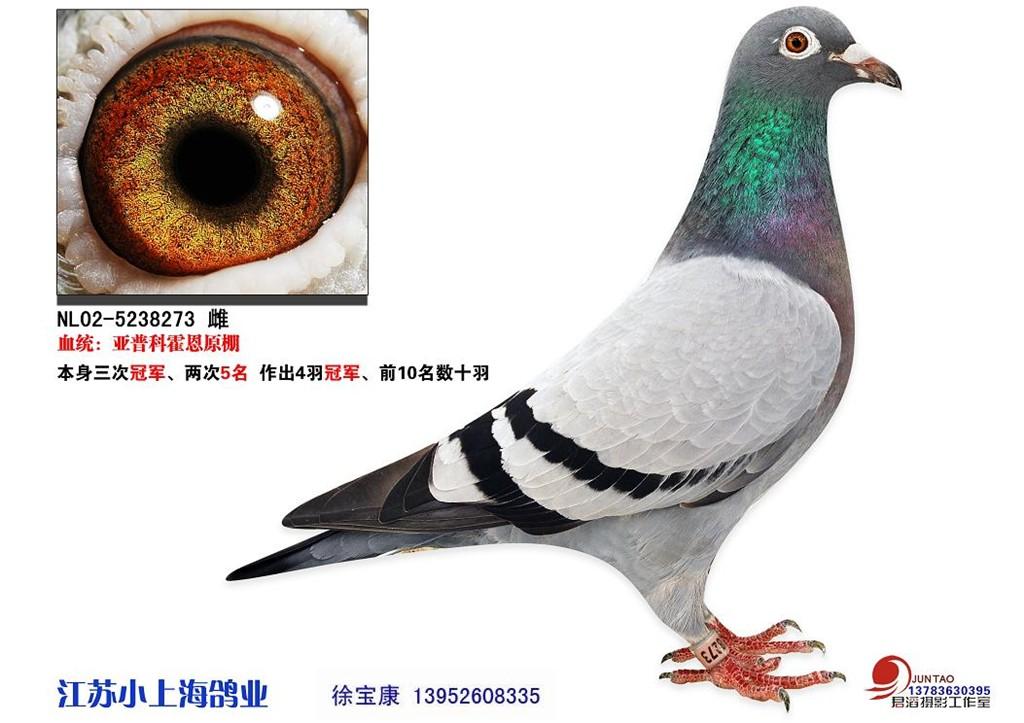 贺州市三调办自治区三调办核查未发现_赛鸽资讯网