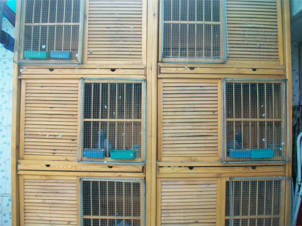 我的种鸽配对笼2 相册 浙江吕氏兄弟鸽舍 赛 高清图片