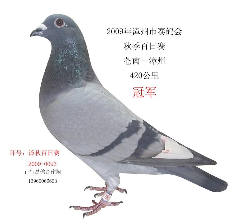 动物 鸽 鸽子 教学图示 鸟 鸟类 800_720