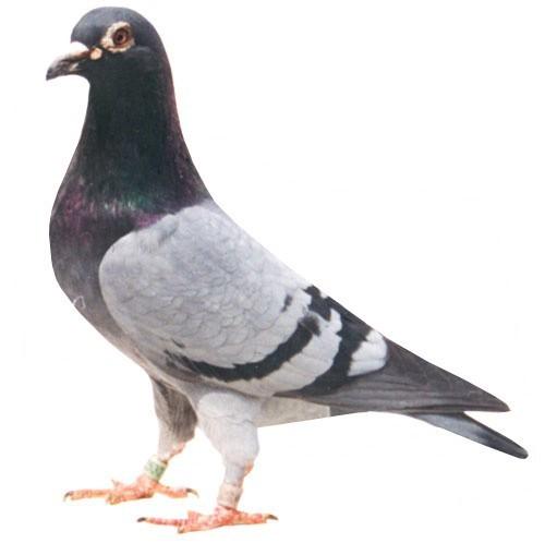 鸟是恐龙的后代